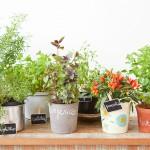 Horta em Apartamento: Saiba como Cultivar