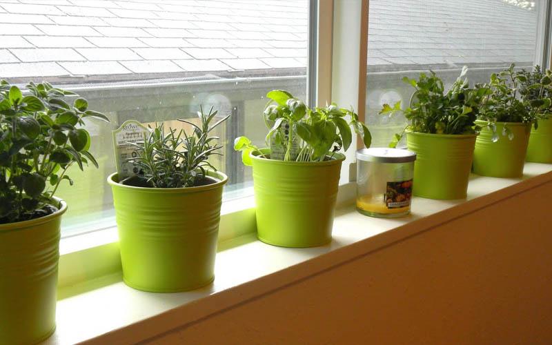 Horta em apartamento saiba como cultivar - Cultivar plantas aromaticas en casa ...