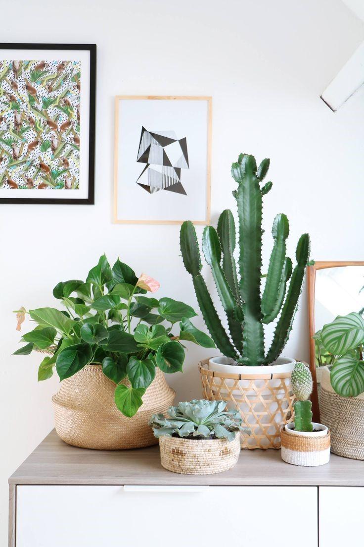 Decora o com plantas 5 dicas imperd veis para sua casa for Decoratie op dressoir