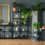 Plantas para apartamento: conheça as melhores opções