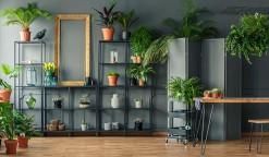 plantas-para-apartamento-capa